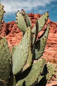 Крупный план кактуса опунции в красочной пустыне