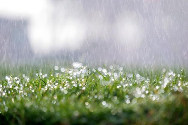 여름에 푸른 잔디에 떨어지는 빗방울의 근접 촬영.