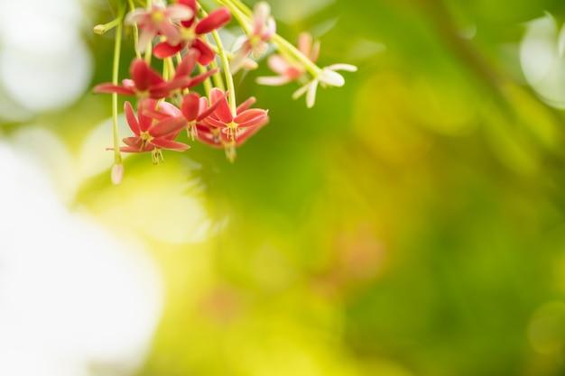Крупный план красного и розового цветка на размытом зеленом фоне, используя в качестве фона естественный ландшафт растений, концепцию страницы обоев экологии.