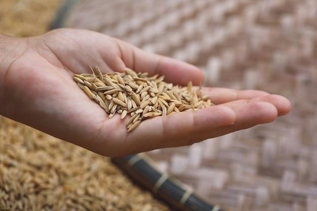 여성의 손에 익은 쌀 곡물의 근접 촬영