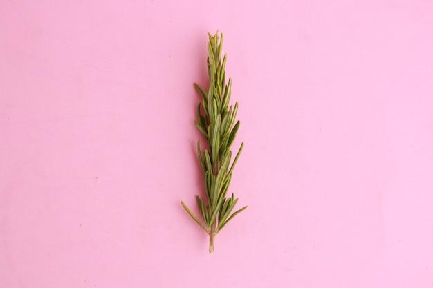 ピンク色の表面にローズマリーをクローズアップ