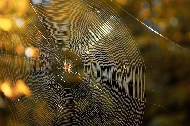 숲에서 웹을 짜는 거미의 근접 촬영 프리미엄 사진