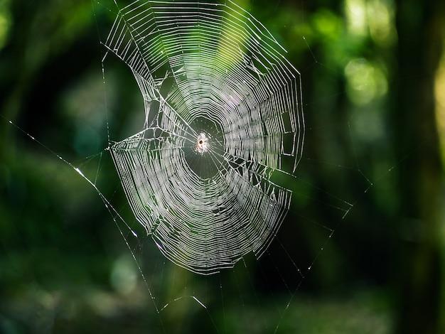 자연 배경에서 거미줄의 근접 촬영