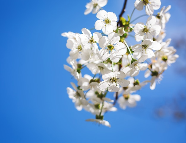 咲く木の春の花のクローズアップ