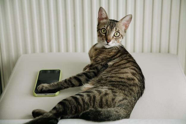 Крупным планом раздели серого кота, лежа на кровати