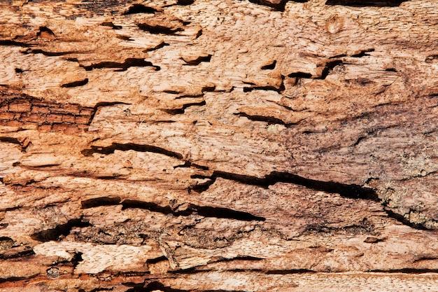 シロアリダメージ木の質感の拡大