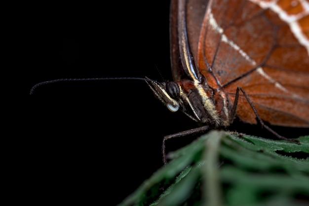 Крупным планом глаза бабочки s