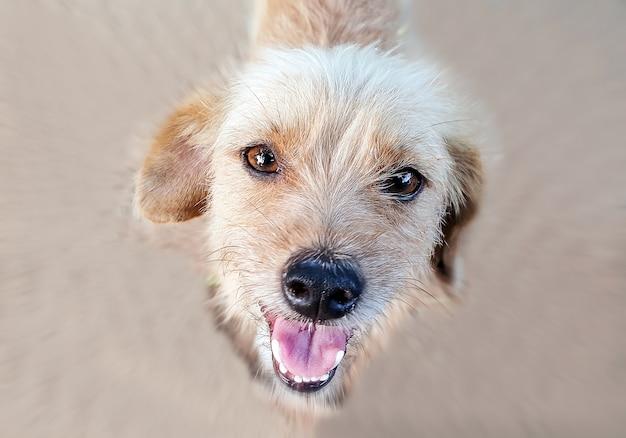 Крупным планом лицо милой собаки.