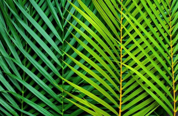 Крупным планом тропических пальмовых листьев природа фон