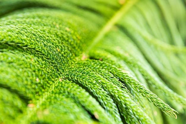 背景として熱帯植物のクローズアップ