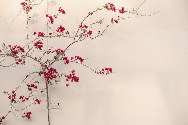 ベージュの壁の近くに美しい赤い花と熱帯植物のクローズアップ