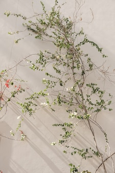 日光の影とベージュの壁に美しい白と赤の花と緑の葉を持つ熱帯植物のクローズアップ