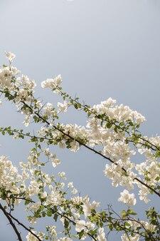 青い空を背景に美しい白い花と緑の葉と熱帯植物のクローズアップ