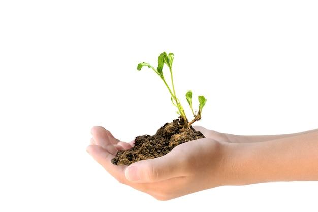 白い背景の上の若い植物を保持している2つの手のクローズアップ。