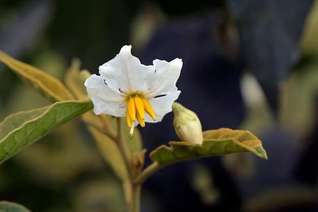 Крупный план белого полевого цветка