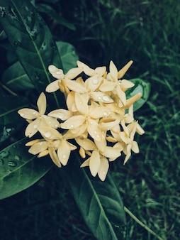庭で白い花粉のクローズアップ