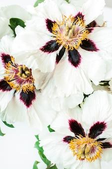흰 모란 꽃의 근접 촬영입니다.