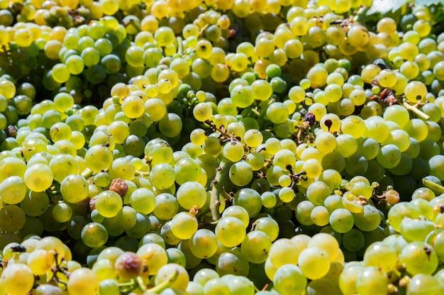 太陽の背景の下で白ワインのブドウのクローズアップ