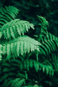 森の中で露が付いている野生のシダの葉のクローズアップ