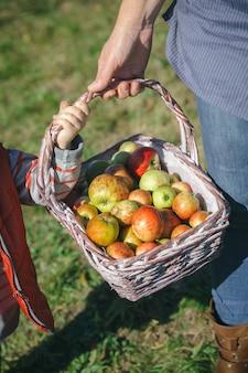 新鮮な有機リンゴと籐のバスケットを保持している女性と少女のクローズアップ。健康食品と収穫時期の概念。