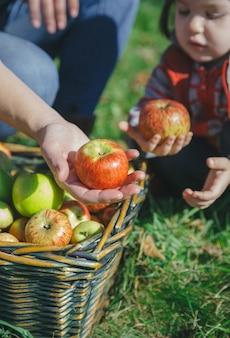 果物の収穫と籐のバスケットから新鮮な有機リンゴを手に持っている女性と少女のクローズアップ。健康的な食事と家族の余暇の時間の概念。