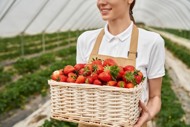 有機性庭の夏のイチゴのおいしいベリーとバスケットを保持している女性の手のクローズアップ。健康的なライフスタイルと健康的な食事。現代の温室の果物とベリー。