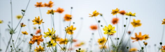 복사 공간 햇빛 아래 흐린 녹색 잎 표면에 노란색과 주황색 코스모스 꽃의 근접 촬영