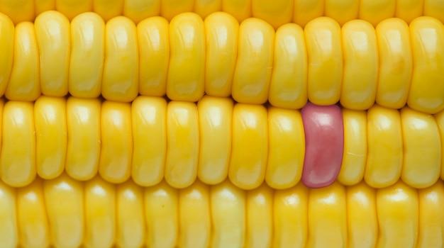 黄色いトウモロコシのテクスチャ背景のクローズアップ