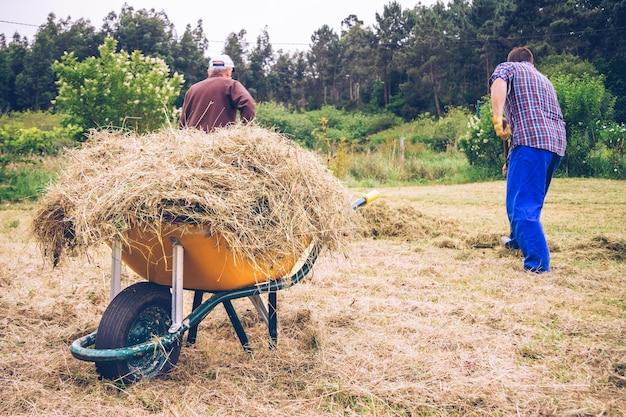 乾燥した干し草とフィールドで掻き集める男性でいっぱいの黄色の手押し車のクローズアップ
