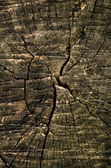 Closeup old natural tree trunk cut texture