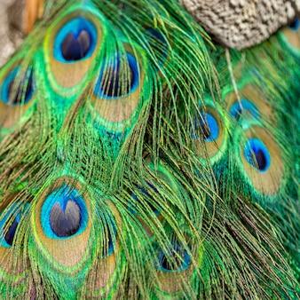 孔雀の羽、テクスチャの背景のクローズアップ。