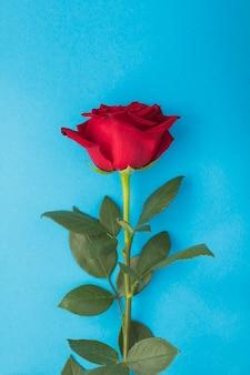 青い背景の上の赤いバラのクローズアップ。場所は垂直です。