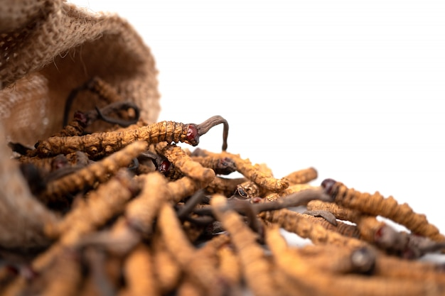 Closeup of ophiocordyceps sinensis or mushroom cordyceps in brown sack bag on isolated