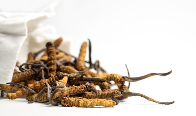 Closeup of ophiocordyceps sinensis or mushroom cordyceps in white cloth bag