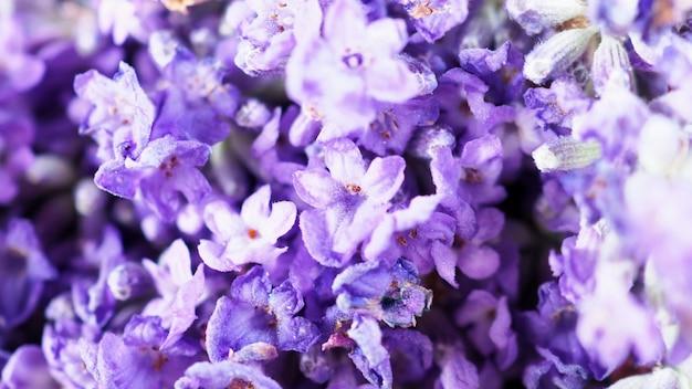 Крупным планом или макросъемки японского букета лаванды, свежесть красочного цветения