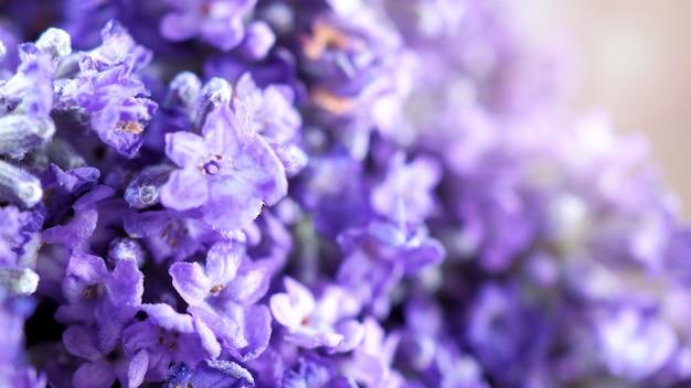 Крупным планом или макросъемки японского букета лаванды, свежесть красочного цветения Premium Фотографии