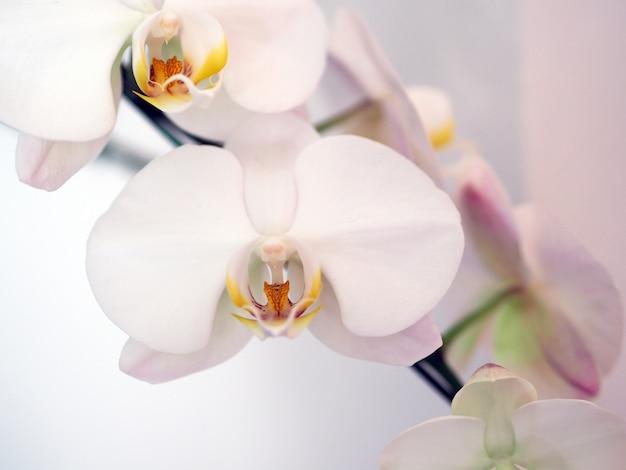 Closeup orchid flower in winter garden background