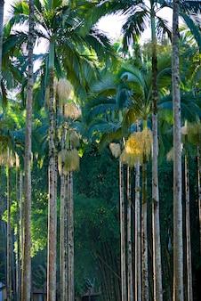 Closeup of palm garden