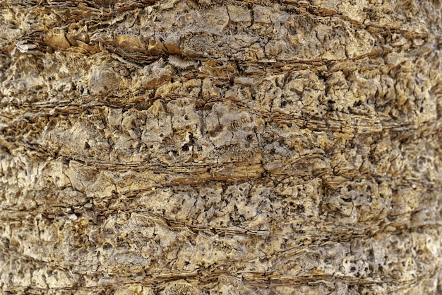 Closeup of a palm tree bark under the sunlight