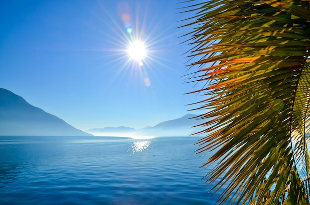 Closeup of palm tree leaves surrounded by the sea and mountains under the sunlight and a blue sky
