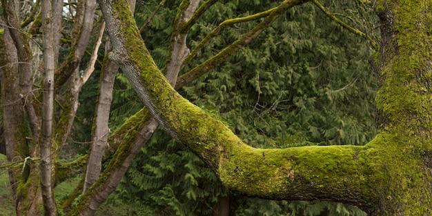 Colpo panoramico del primo piano degli arti del muschio in una foresta verde durante il giorno