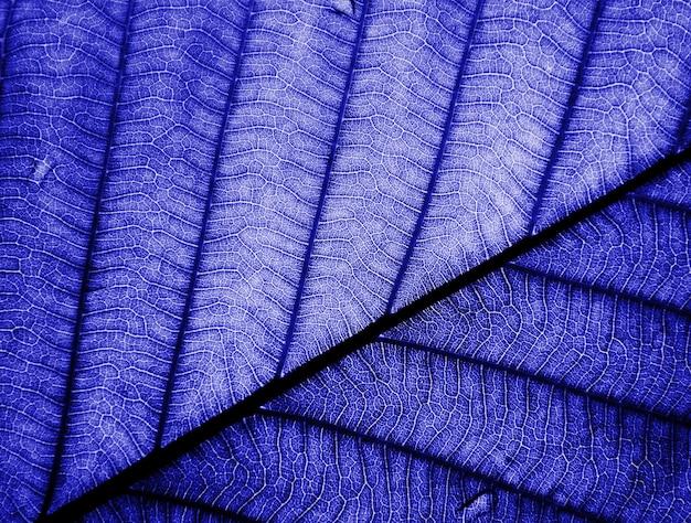 Closeup perfect blue leaf