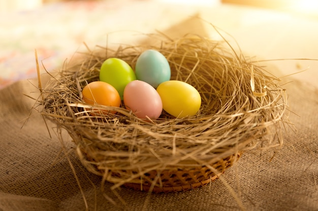 Closeup photo of colorful easter eggs lying in nest at sunny day