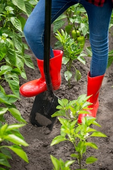 Closeup photo of feet in red rubber boots on black metal shovel at garden
