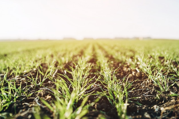 Closeup photo of growing plants on the field