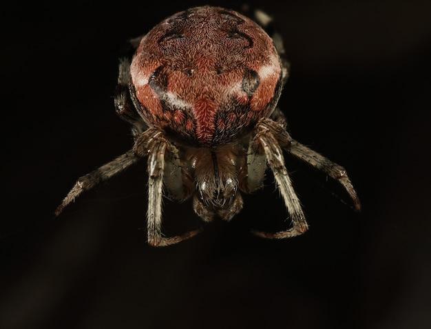 거미의 근접 촬영 사진