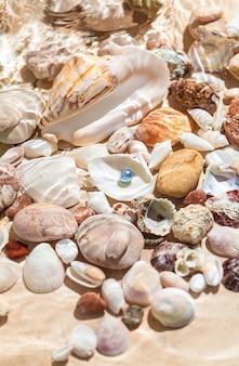 貝殻に水中に横たわる黒真珠のクローズ アップ写真