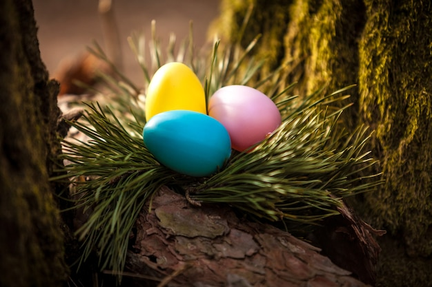 나무에 둥지에 착 색된 부활절 달걀의 근접 촬영 사진
