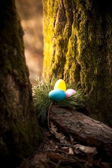 숲에서 나무 아래 숨겨진 색된 계란의 근접 촬영 사진