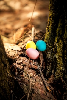 숲에 누워 색된 계란의 근접 촬영 사진